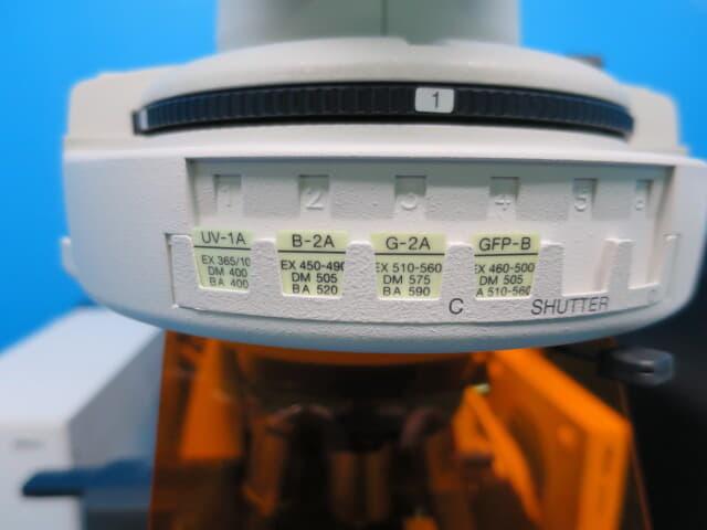 蛍光観察 微分干渉観察 蛍光微分